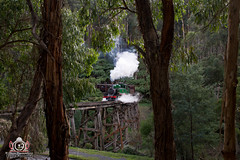 Through the Trees (R Class Productions) Tags: puffing billy railway steam train heritage vintage baldwin locomotive green forest dandenong ranges tourist narrow gauge gembrook belgrave
