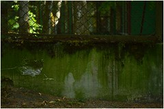 green is a happy color (haidem3) Tags: green fence old oldbuilding nature wall summer