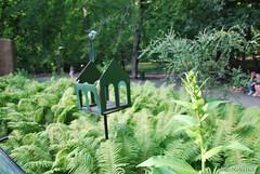Київ, Ботанічний сад імені Фоміна Ukraine InterNetri 38