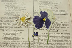 Page Out Of Summer (obsequies) Tags: pansy pansies daisy daisies flowers flower pressed flat viola violas garden vintage shabby chic cottage mood moody dark death print book purple muted whimsy whimsical petals petal depth simple dreary aesthetic love life nature granny art