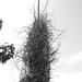 Lamppost bird's nest
