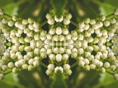 Psychadelic II (Alexander Day) Tags: alex alexander day new jersey nikon d3300 duke farms flora nature mirror