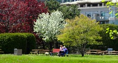 Sitting on a bench with someone you love. (Trinimusic2008 -blessings) Tags: trinimusic2008 judymeikle nature hbm bench benches park spring may 2018 sunny trees grass outdoors toronto to ontario canada