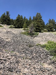Sweetgrass Hills Montana 2018 (jasonwoodhead23) Tags: usa hiking trees montana hills sweetgrass butte rocks