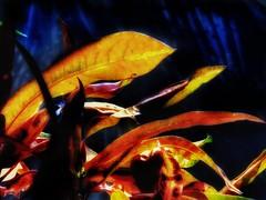 (FOTOS PARA PASAR EL RATO) Tags: cdmx naturaleza hojas contraluz naranja plantas