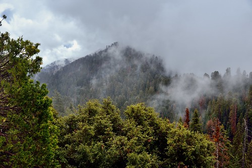 Low Clouds Moving Across the Hillsides and Peaks of  Redwood Canyon