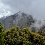 Low Clouds Moving Across the Hillsides and Peaks of  Redwood Canyon thumbnail
