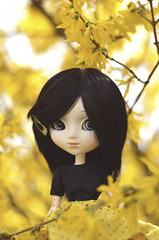 Avery's new look! (Dragonella~) Tags: pullip doll avery kaela obitsu pullipobitsu pullipkaela pullipavery pullipdoll groove dragonella nikon d5100 forsynthia yellow flower rewigged cancan black fashiondoll outdoor