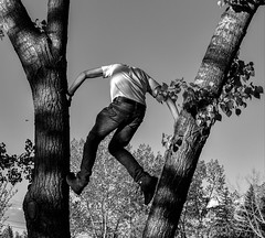 The Climb (Jane Olsen) Tags: man tree leaves branches climbing outdoor park calgary summer