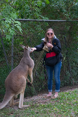 Australia_2018-77.jpg (emmachachere) Tags: subtropical trees hike waterfall boatride springbrook australia rainforest kanagroo animals koala brisbane boat lonepinekoalasanctuary