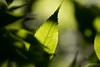 Light and shadows (jussitoivanen) Tags: bokeh bokehphoto bokehlicious bokehoftheday macro macrounlimited macrophotography macropic macrophoto macrophotos nature naturephoto naturescenes naturephotographer naturephotography naturepic canon canon6d leafs