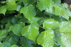 Kew3 (Eugene Regis) Tags: london kew kewgardens royalbotanicgardenskew