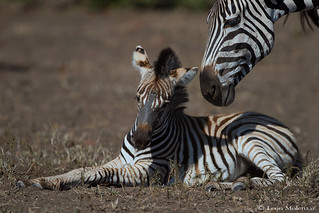 Caring parent