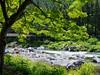 Beginning of Summer Shine (Eshke04) Tags: beginning summer shine river light reflection trees green leaves forest nature landscape shadows mitake okutama tokyo water