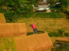 Children playing on rice field in Vietnam (phuong.sg@gmail.com) Tags: agriculture asia asian boy child children china country countryside cultivation ethnic ethnicity farm farmer field fun girl grain green growth harvest hmong indochina joy kids many nature outdoor paddy people plant plantation rice rural sapa september terraced together traditional tropical vietnam vietnamese water