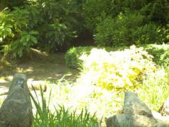 Walk in Sir Thomas & Lady Dixon Park Belast 30052018 (irishlad031) Tags: belfast sirthomasladydixonpark coantrim ulster ulsterisirish park flowers gardens garden greenspace
