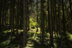 Little lit tree (Sebo23) Tags: lit angeleuchtet licht light lichtstimmung tree baum wald forest nature naturaufnahme natur landscape landschaft canon6d tamron4518 lichtschatten
