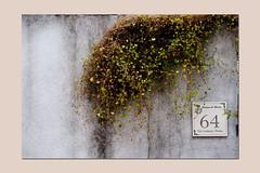 minimal mood (sandrorotonaria) Tags: torrice ciociaria wall muro bianco white minimal