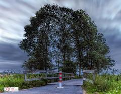 Tree Arch - Bomen Boog (Reina Smallenbroek) Tags: reinasmallenbroek nienoord trees bomen bridge brug leek deonlanden le canon langebelichting longexposure
