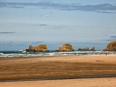 sea gull and people Cannon Beach (maryannenelson) Tags: oregon summer landscape cannonbeach coast sand sky rocks