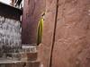 Tashilhunpo Monastery (mr oioi) Tags: tibet tibetan boudhism bouddhism monk red yellow