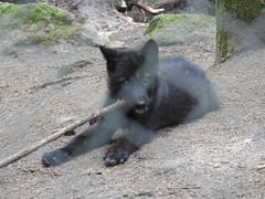 DSCN0396 (SiegmundB) Tags: parc animalier des monts de gueret