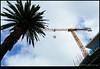 180218-6283-XM1.JPG (hopeless128) Tags: australia sky palmtree sydney 2018 crane cronulla newsouthwales au