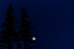 In the boughs (langdon10) Tags: canada canon70d clearskies moonlight nighttime novascotia moon outdoors trees