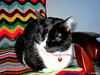 1.268 - I feel bad, I'm sick (esnalar) Tags: leo amigo colega compañero gato felino mascota mascotas socio mascot mascots friend colleague companion compagnon partner cat cats feline felines