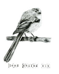 Long-tailed Tit Sketch (Girl With Butterfly Wings) Tags: longtailed longtailedtit feathers perched fluffy drawing sketch art illustration