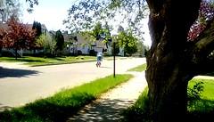 Springtime cyclist! 365/222 (Maenette1) Tags: springtime cyclist street neighborhood menominee uppermichigan flicker365 allthingsmichigan absolutemichigan project365 projectmichigan