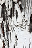 A  Ghost (gripspix (OFF)) Tags: 20180420 haigerloch badenwürttemberg germany deutschland decay zerfall detail door garage tor white painted weis angemalt rissig cracked peelingpaint abblätterndefarbe imagination vorstellungskraft texture textur
