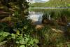 Dotterblumen am Piburger See (Ernst_P.) Tags: aut oetz österreich piburgersee tirol dotterblume sumpfdotterblume blume blüte see sony zeiss distagon 24mm f20 t