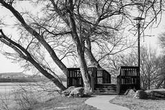 lookout (fallsroad) Tags: tulsaoklahoma arkansas river tree trees nature riversidepark blackandwhite bw monochrome