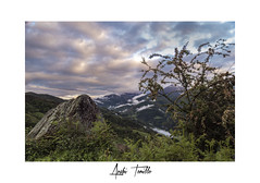 _ATP9052 (anahí tomillo) Tags: nikond7500 lightroom naturaleza nature montaña mountain niebla fog nubes clouds roca rock hierba grass arbusto bush asturias españa spain