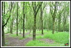 Snipe Dales 09.06.18 (26) (nowboy8) Tags: nikon nikond7200 redhill snipedales lincolnshirewildlifetrust lincolnshire wildlife walk trees