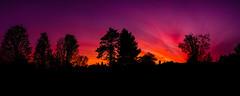 Sunrise Panorama (Nicholas Erwin) Tags: pano panorama panoramic sunrise landscape nature colorful magenta silhouette naturephotography dawn morning trees colors color colourful spring contrast waterbury vermont vt unitedstatesofamerica usa america fujifilmxt2 fujixt2 fujifilm fuji xf1855mmf284rlmois xf1855 fujifilm1855 fav10 fav25 fav50