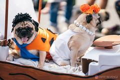 PugCrwal-187 (sweetrevenge12) Tags: portland oregon unitedstates us pug parade crawl brewing sony pugs dog pet