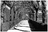 when the sun shines (Armin Fuchs) Tags: arminfuchs würzburg residenz residenzgarten light shadows trees barock unesco weltkulturerbe spring hofgarten niftyfifty rokoko