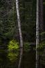 Heijastus (Markus Heinonen Photography) Tags: metsä forest skog puu tree heijastus reflection luonto nature suomi finland vesi water