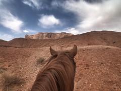 IMG_3681 (adrien.boublil) Tags: arizona roadtrip usa cowboy western photography grandcanyon phoenix tucson saguaro sinagua horses monumentvalley johnwayne petrifiednationalforest canyondechellynationalmonument antelopecanyon flagstaff harkins poncho meteorcrater landscapes