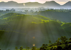 Playing with light and shadow (Safran Nasution) Tags: rol pengalengan westjava cukul hill shadow advanture teaplantation sunrise nikon d800 indonesia