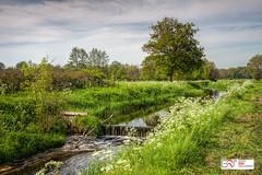 De Loop Roden (Reina Smallenbroek) Tags: reinasmallenbroek drenthe landschap water landscape rural landelijk roden netherlands trees bomen stroom stream green groen deonlanden natuurbeheer canonnederland canon lee polarisatie fluitekruid