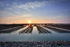 Oyster field,蘆竹溝蚵田 (Vincent_Ting) Tags: 蘆竹溝 蚵田 倒影 reflections clouds 雲彩 oysterfield taiwan 台灣 tainan 台南 北門區 蘆竹溝漁港 fishingport sunset 夕陽 tide 潮汐 蚵架 water sea sky vincentting