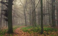 Snowless (Netsrak) Tags: baum bäume eifel europa europe herbst landschaft natur nebel wald autumn fall fog landscape mist nature woods