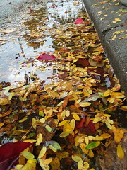 11-05-17 Dayton 53 leaves, fall color (Chicagoan in Ohio) Tags: dayton clouds sun sunhalo leaves fallcolor