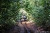 Cuban people (Andrea Morleo) Tags: natura contadino lavoratore campagna slittino cane amicofedele lavoro fatica cuba sudamerica spirito campesino mucche bufale natur nature campesinos