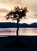 The Lone Tree at Loch Lomond (mianeko) Tags: milarrochybaytree milarrochybay lochlomond scotland scotlandsbeauty scottishlandscape scotlandphotography scottishhighlands scottishsunset sunset landscapephotography landscape lonetree