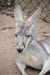 Australia_2018-55-2.jpg (emmachachere) Tags: subtropical trees hike waterfall boatride springbrook australia rainforest kanagroo animals koala brisbane boat lonepinekoalasanctuary