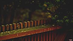 The Gate (MBates Foto) Tags: availablelight bokeh color daylight existinglight fence gate nikon nikond810 nikonfx outdoors plants zeisslens spokane washington unitedstates 99203